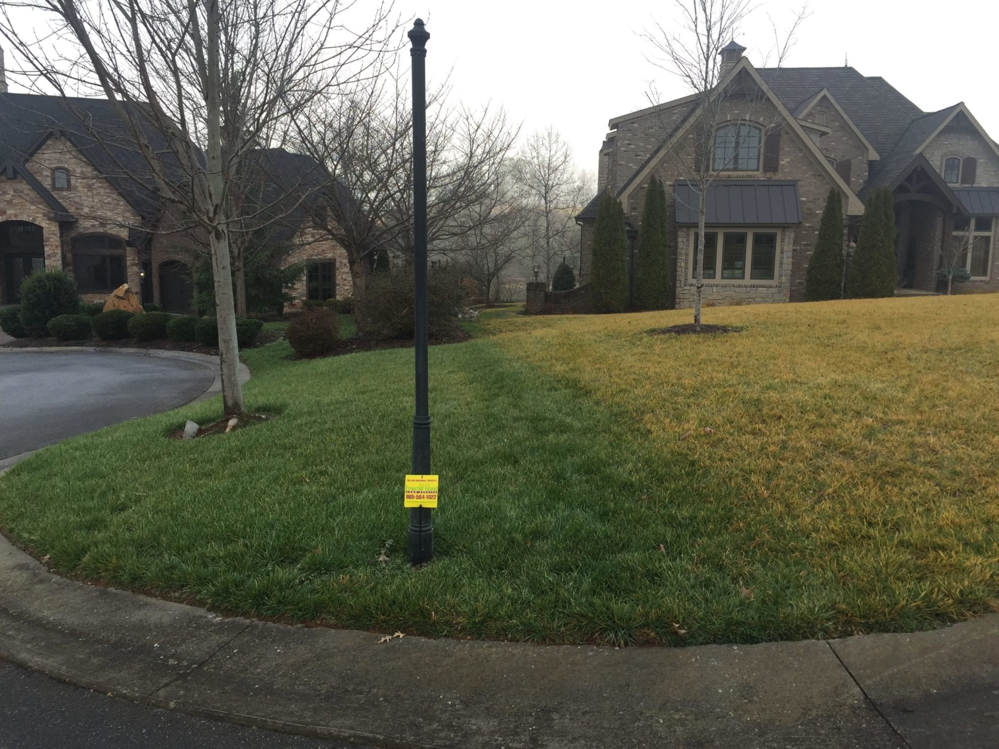 a side by side comparison of 2 lawns showing the healthier lawn thats treated by Emerald Island