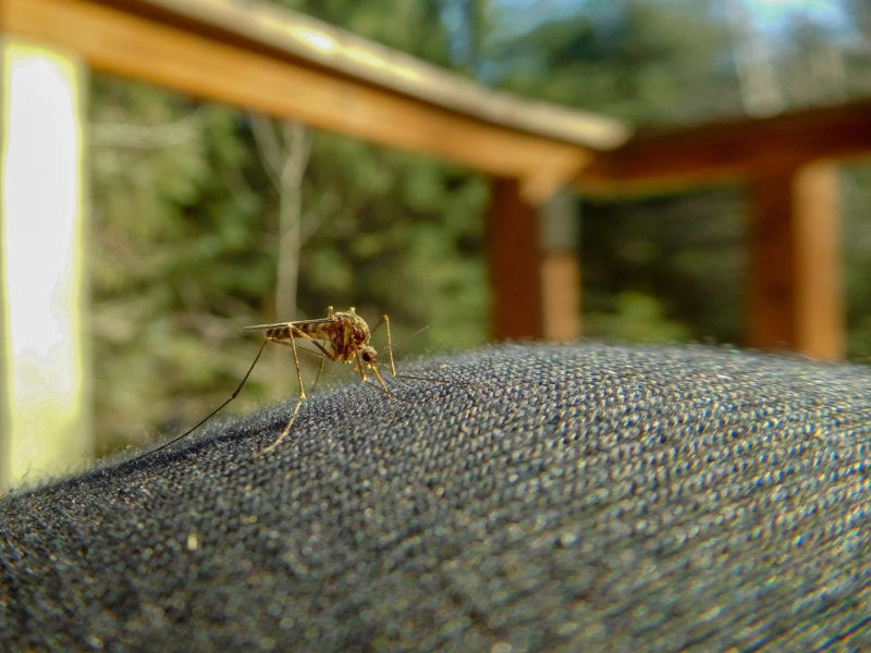 close up of a mosquito on outdoor furniture