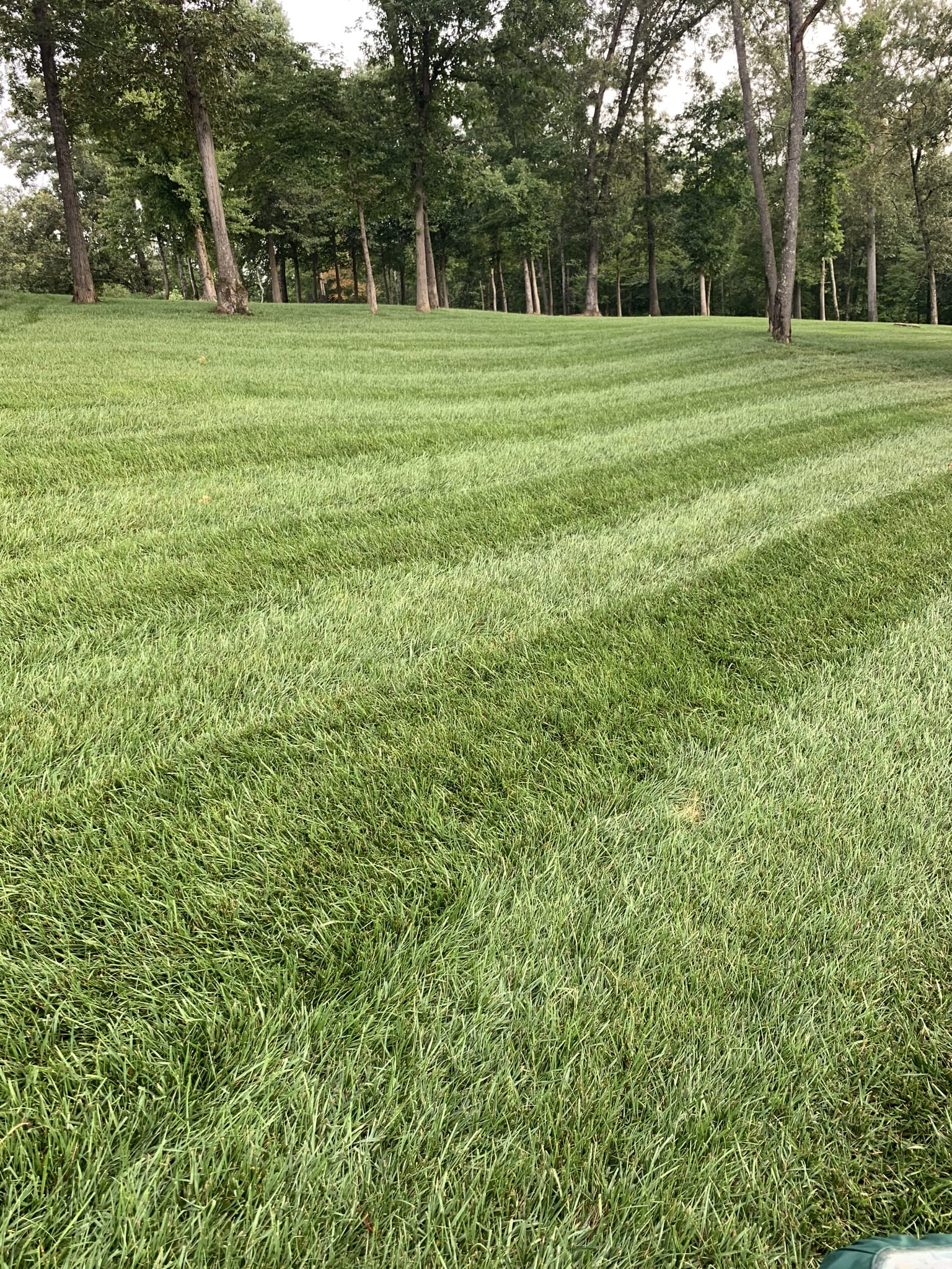 a large yard with cut lines after being mowed