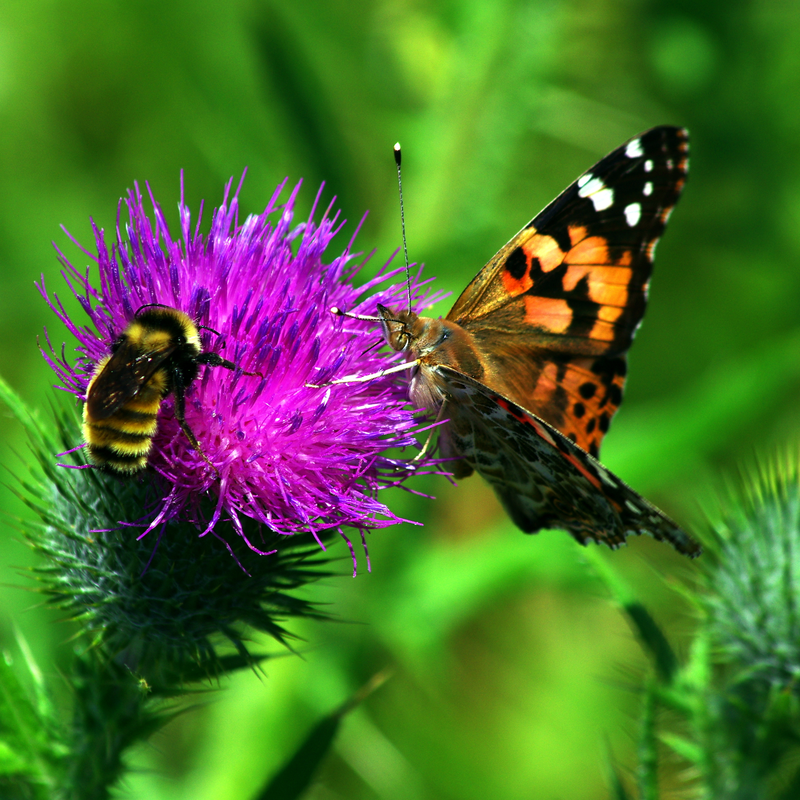 a bee and butterfly on flower