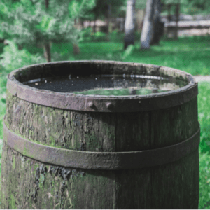 standing water in a barrel