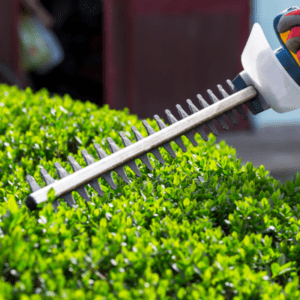 shrubs being trimmed with a trimmer