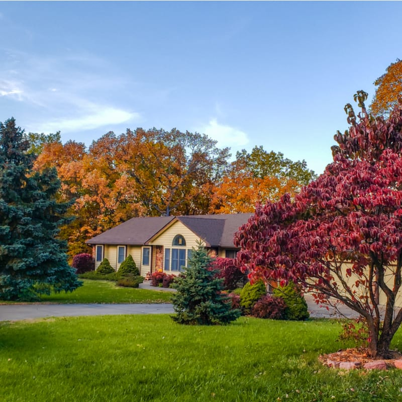 trees and shrubs in a yard in the fall