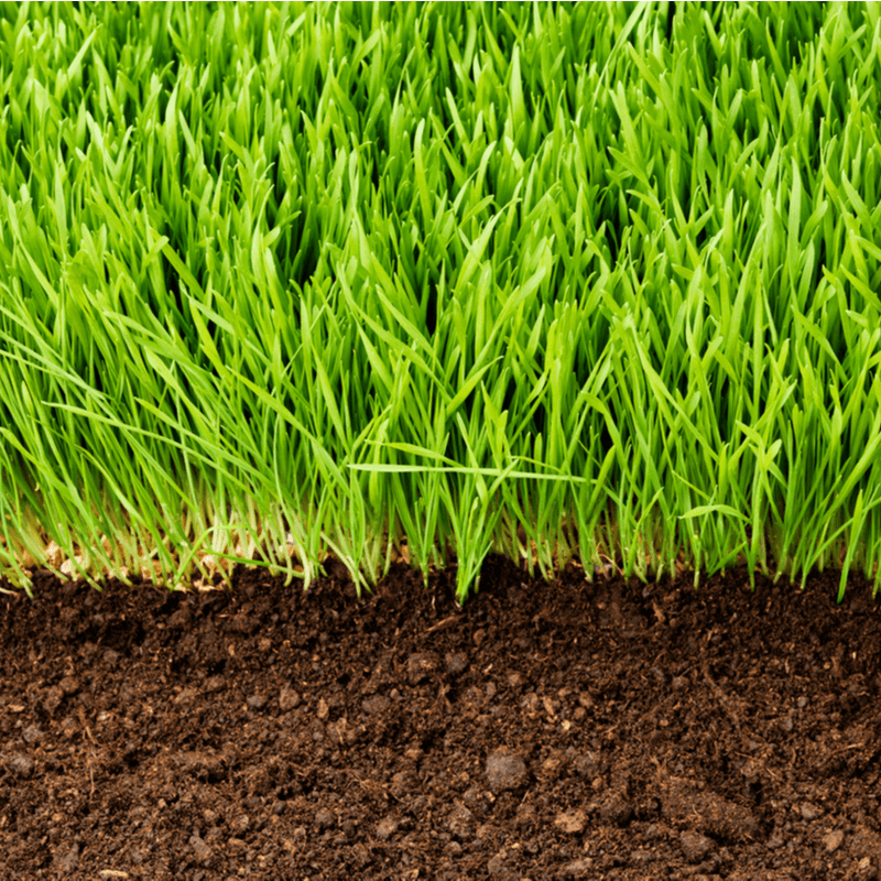 healthy lawn cross section
